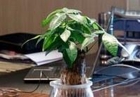 办公室适合养什么风水植物?