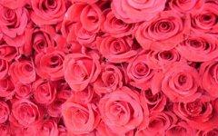 20朵玫瑰代表什么?