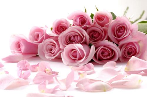 美国的国花是什么花?玫瑰(图)