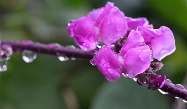 雨露后的花朵 美图(图)