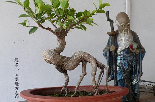 榕树盆栽怎么造型 小榕树怎样修剪造型(图)