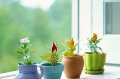 室内摆放什么花草好 什么花草能起到净化空气的作用(图)