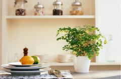 室内摆放植物有哪些好处(图)