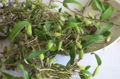 石橄榄的功效与作用及食用方法(图)