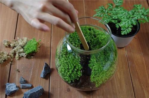 自己做苔藓微景观 手工制作苔藓微景观(图)