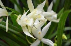 南方哪种兰花最好养 适合在南方养殖的兰花有哪