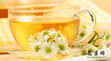 菊花茶的功效与禁忌有哪些?