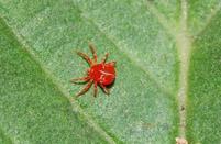 杜鹃花的常见病虫害及其防治方法