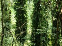 龟背竹常见病虫害及其防治方法