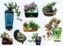 多肉植物移植到铁罐里,DIY清新盆栽的教程