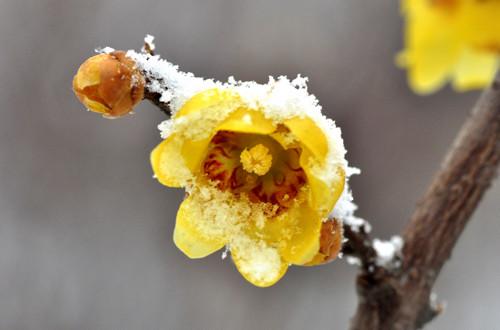 惊艳 冰雪里的花朵(组图)