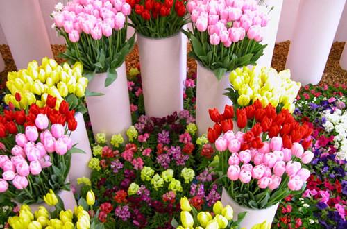 <b>怎么给鲜花保鲜 鲜花怎么保鲜时间长(图)</b>