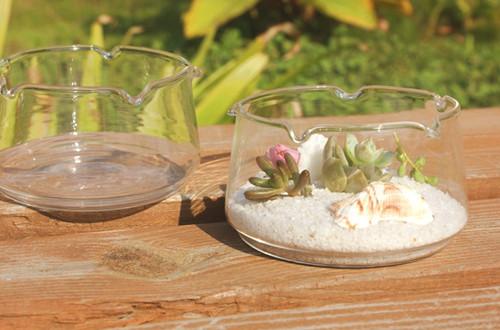 哪些多肉植物品种适合水培 适合水培的多肉植物有哪些(图)
