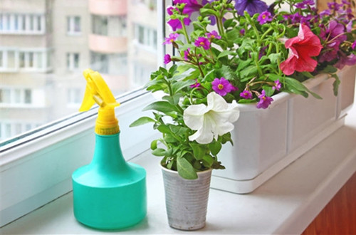 <b>阳台养花如何遮阳 阳台养花技巧和注意事项(图)</b>
