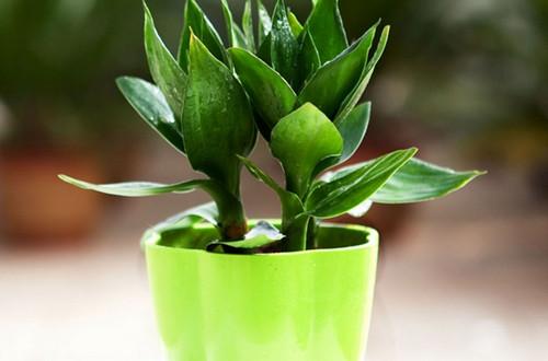 <b>水培植物哪种好养 水培植物有哪些好养(图)</b>