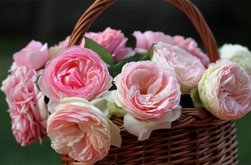 如何让鲜花保存的更久 鲜花保存长久的方法(图)