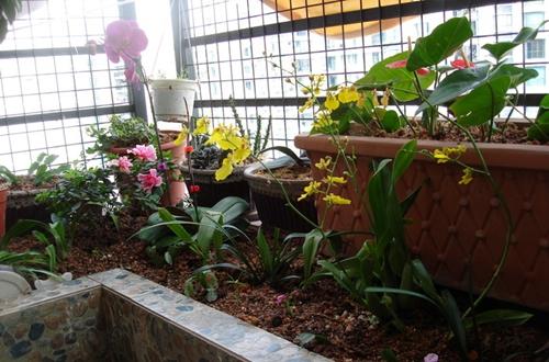 <b>半阴阳台适合种什么花 哪些花适合种在半阴阳台上(图)</b>