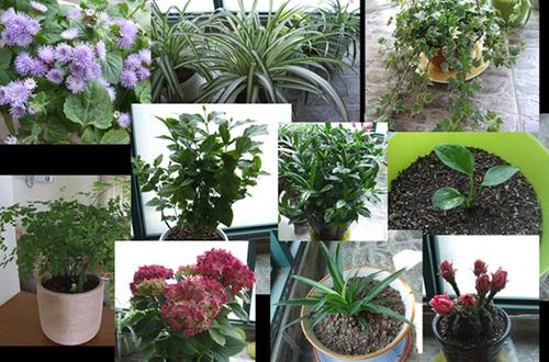 <b>光照不太多的阳台适合养什么花 光照不太多的阳台种什么植物好(图</b>