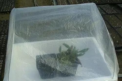 冬天怎么给花做个暖房 不花钱又