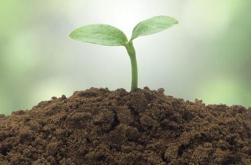 怎样让土壤变酸 如何增加土壤酸