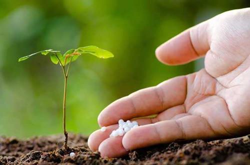 养花如何养根 要想花长的好养好