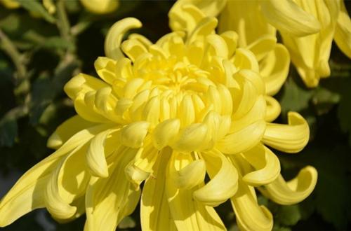 适合冬季养的花卉有哪些 耐寒的