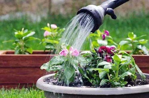不浇水蔫,浇水烂,养花到底要怎