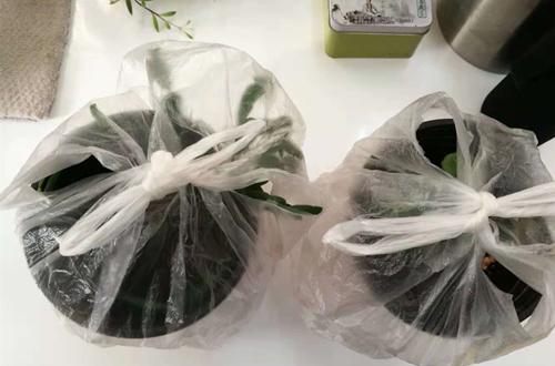 什么是植物套袋保湿法 怎么给植物套袋保湿(图)