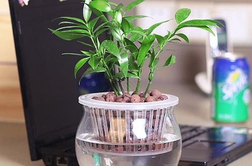 水培植物需要注意什么 水培植物