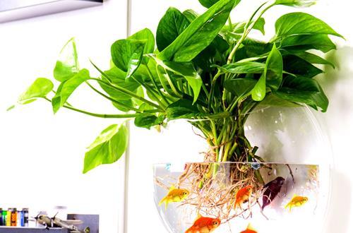 家中养花有哪些好处 适合养什么植物在家里(图)