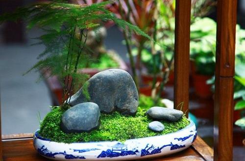 文竹日常要怎么养护 文竹养护的