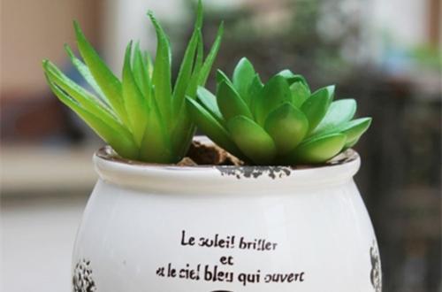 观赏植物如何选择花盆 如何正确