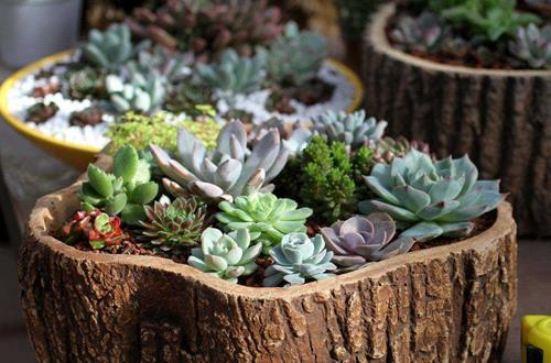 养花怎么施肥 养花有哪些施肥技