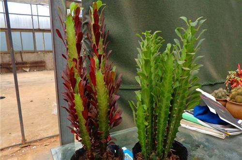 新房适合放什么植物好 刚装修好的房子里放什么植物