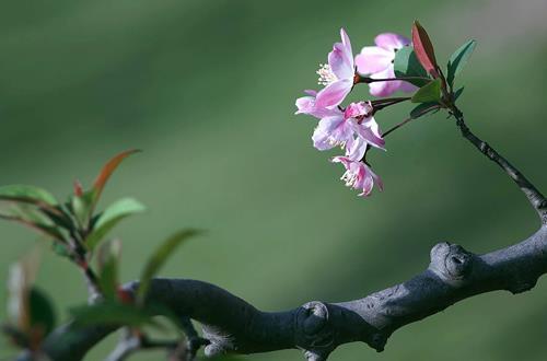 花木在春分后期怎么养护呢(图)