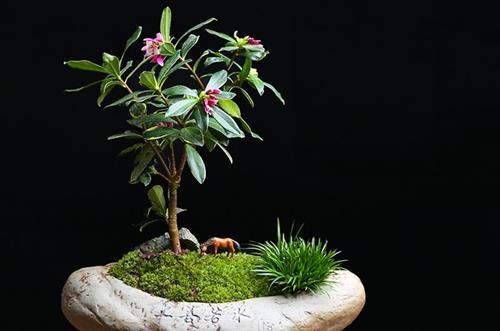 <b>哪些植物适合扦插种植呢(图)</b>