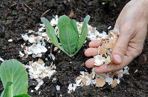 在家怎么自制花肥 自制花肥有哪