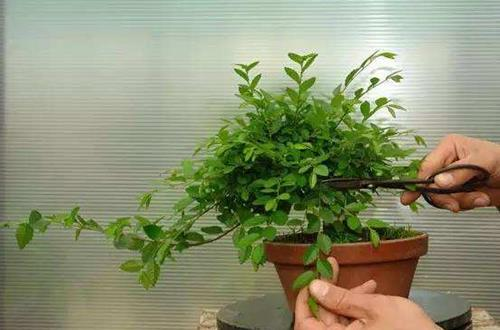 春天怎么给植物修剪 春天修剪需要注意什么问题(图)