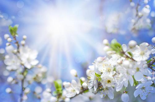 光照对花有什么影响 光照对花
