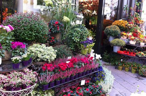花卉常见病虫害有哪些 花卉病