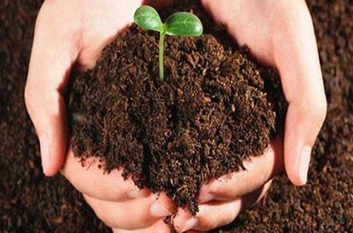 如何判断花土的酸碱性 酸性土壤