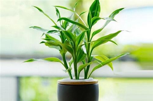 家里财位,按风水来讲放什么植物