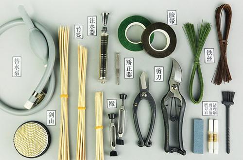插花需要用到哪些工具 怎么使用(
