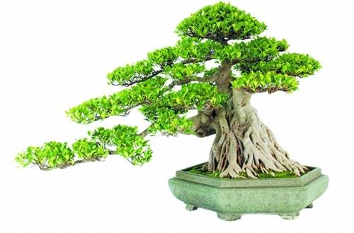 怎么判断植物是否进入休眠期(图)
