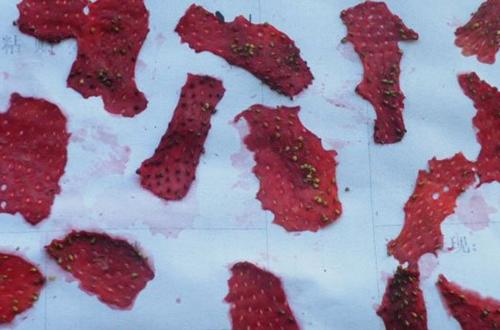 草莓种子的获取方法有哪些(图)