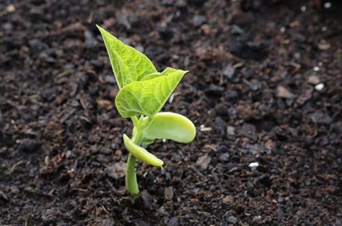 怎样让土壤带酸性,有人扔铁钉,