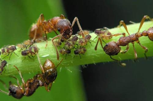 盆栽的蔬菜、花卉里很多的蚂蚁,