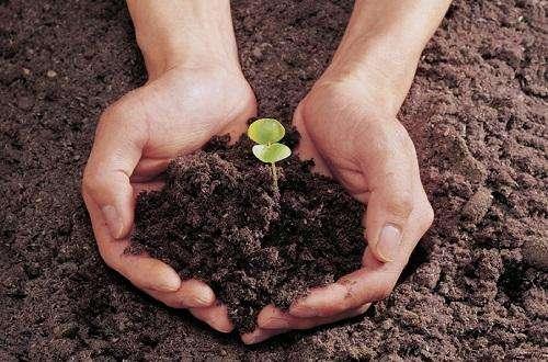 原来的土结块了怎样改变土质 怎