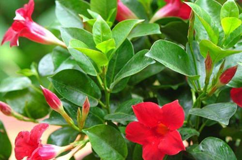 新买回来的植物要怎么养护