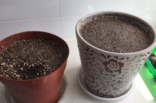 这自己配制的营养土透水性为什么